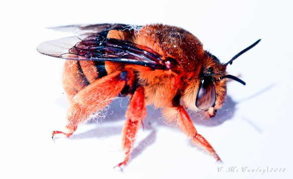 Bee 1-2